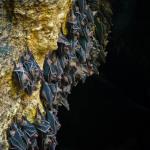 Monfort Bat Cave (4)