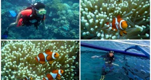 divingsamal